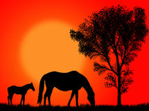 Horse pasture. Horse and colt pasturing against a colorful sunset Stock Images