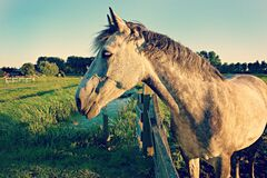 Horse in pasture Royalty Free Stock Image