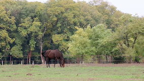 Horse on pasture stock video footage