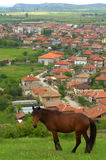 Horse pasture Balkans village background Royalty Free Stock Photo