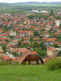 Horse pasture Balkans village background Stock Images