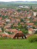 Horse pasture Balkans village background Stock Images