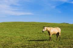 Horse in Pasture Stock Photography