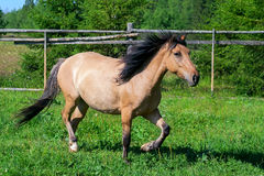 The horse in the pasture Royalty Free Stock Photos
