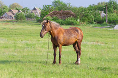 Horse on a pasture Stock Photo