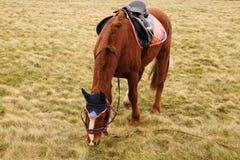 Horse at pasture Stock Photo