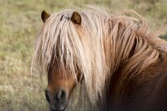 Horse in pasture close up Stock Image