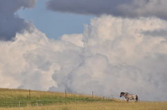 Horse on pasture, Cloudy sky Stock Photo