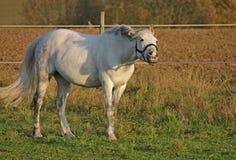 Horse, Pasture, Coupling, Paddock Royalty Free Stock Photos