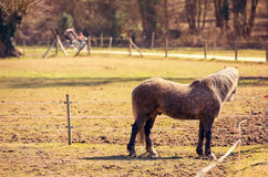 Horse on countryside pasture Stock Photos