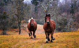 Horse, Pasture, Ecosystem, Horse Like Mammal Royalty Free Stock Photo