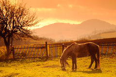 Horse on pasture in evening glow Royalty Free Stock Photography