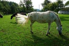 Horse, Pasture, Fauna, Grass royalty free stock photos