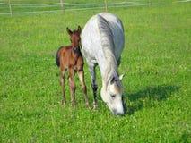 Horse, Pasture, Fauna, Grass stock photos