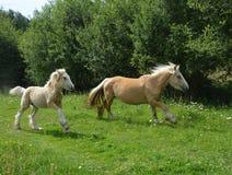 Horse, Pasture, Fauna, Horse Like Mammal stock image