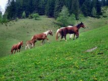 Horse on a pasture royalty free stock photos