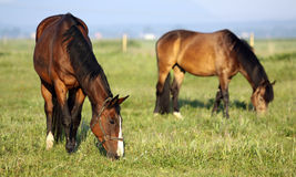 Horse pasture Royalty Free Stock Photo
