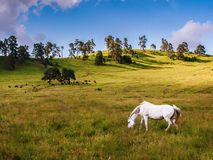 Horse pasture. AT GEORGIA MOUNTAIN HILL royalty free stock images