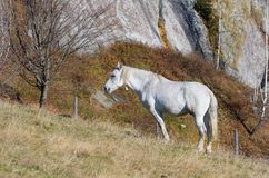 Horse on pasture Royalty Free Stock Image