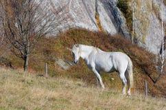 Horse on pasture Stock Photos
