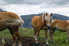 Horse, Pasture, Grazing, Ecosystem Royalty Free Stock Images