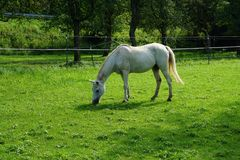 Horse, Pasture, Green, Grass Stock Photography