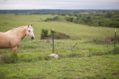 Horse in a pasture Stock Images