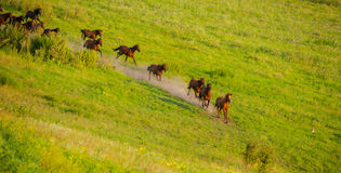 Horse on pasture Stock Images