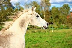 Horse, Pasture, Horse Like Mammal, Fauna stock image