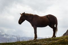 Horse in the pasture Royalty Free Stock Images