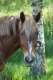 The horse in the pasture. Stock Image
