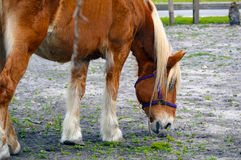 Horse in pasture Stock Images