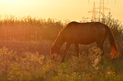 Horse in pasture Royalty Free Stock Photo