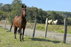 Horse in pasture Royalty Free Stock Images