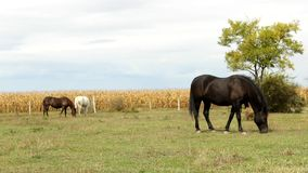 Horse  in the pasture Stock Photos