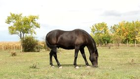 Horse  in the pasture Stock Images