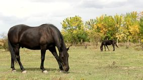 Horse  in the pasture Royalty Free Stock Image