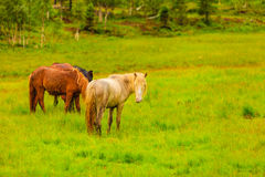 Horse on pasture. Royalty Free Stock Photo