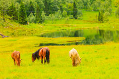 Horse on pasture. Royalty Free Stock Photography