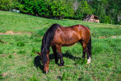 Horse pasture Royalty Free Stock Photography