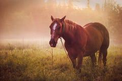 Horse pasture morning fog dew Stock Photo