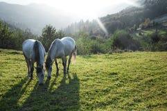 Horse pasture morning fog dew Royalty Free Stock Photo