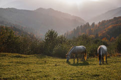 Horse pasture morning fog dew Royalty Free Stock Photos