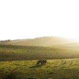 Horse pasture morning fog dew Stock Photos