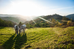 Horse pasture morning fog dew Stock Photography