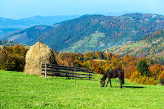 Horse. In a pasture in the mountains in autumn Carpathian Royalty Free Stock Photo