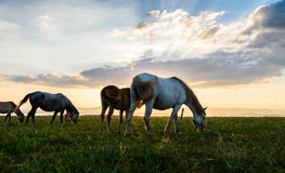 Horse on pasture at November evening near sunset Stock Images