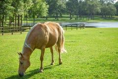 Horse in pasture Stock Photo