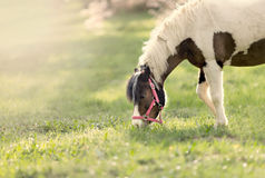Horse on the pasture Royalty Free Stock Photography