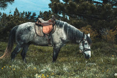 Horse on the pasture. Royalty Free Stock Photography